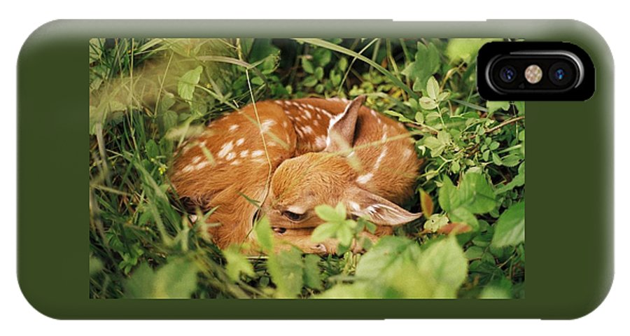 Deer IPhone Case featuring the photograph 080806-17 by Mike Davis