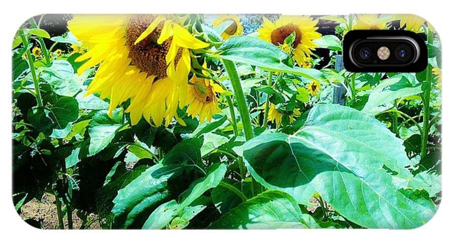 Sunflowers. Flower IPhone X Case featuring the photograph 08252013032 by Debbie L Foreman