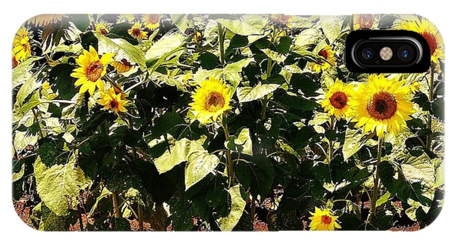 Sunflowers IPhone X Case featuring the photograph 08252013038 by Debbie L Foreman