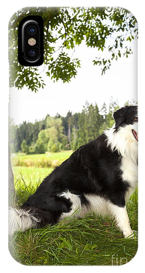 Dog IPhone X Case featuring the photograph Border Collie In The Nature by Regina Koch