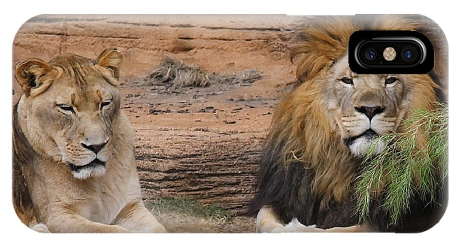 Lion IPhone X Case featuring the photograph African Lion Couple by Cathy Lindsey