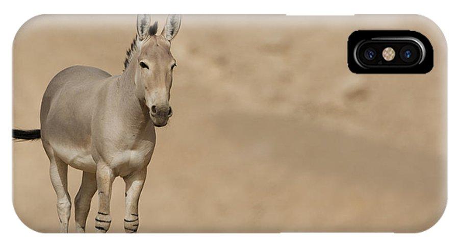 African Wild Ass IPhone X / XS Case featuring the photograph African Wild Ass Equus Africanus by Eyal Bartov