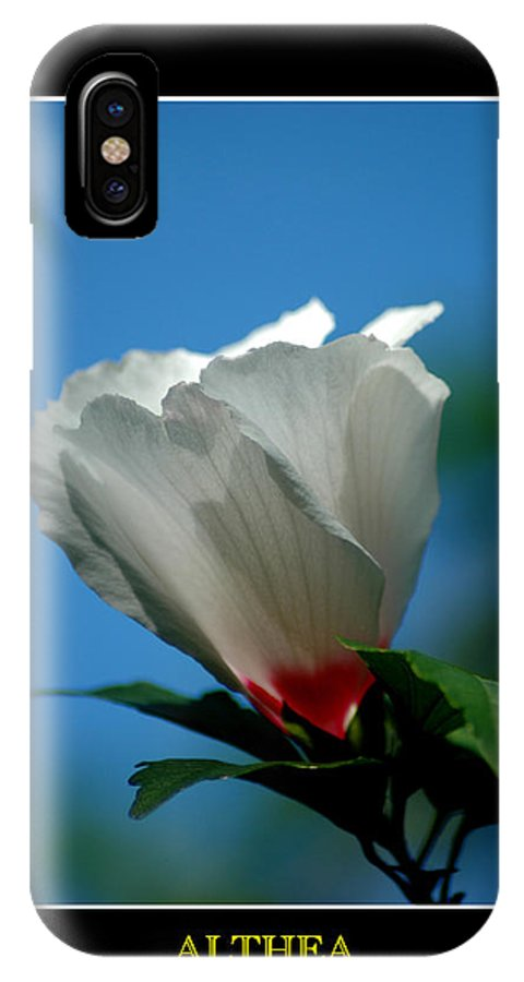 Plant IPhone X Case featuring the photograph Althea Flower by David Weeks