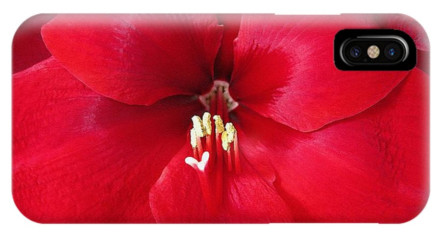 Mccombie IPhone X Case featuring the painting Amaryllis Named Black Pearl by J McCombie