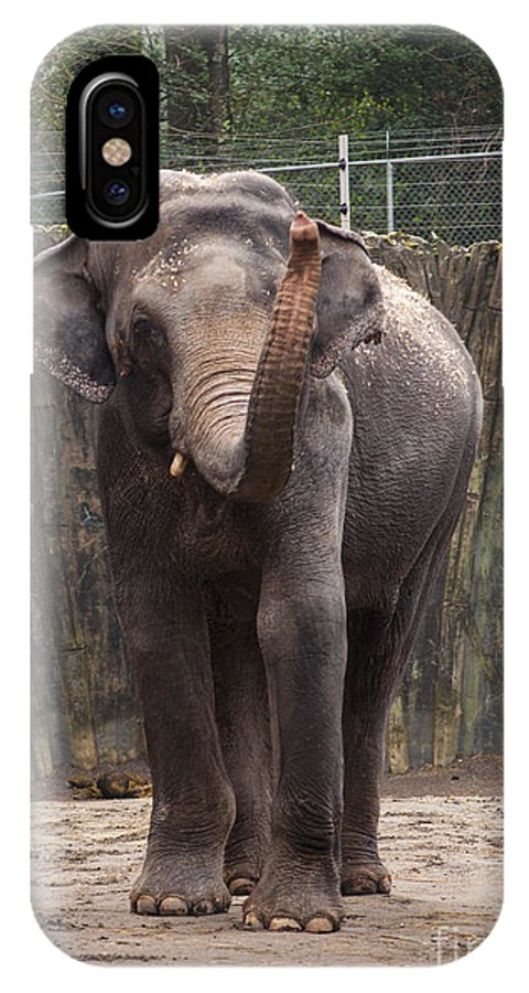 Washington Metro Park Zoo IPhone X Case featuring the photograph Asian Elephant by Mandy Judson