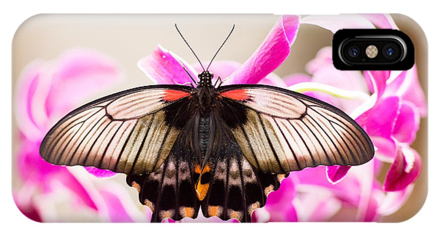 Asian IPhone X Case featuring the photograph Asian Swallowtail Tropic Butterfly Sucking Nectar by Stephan Pietzko