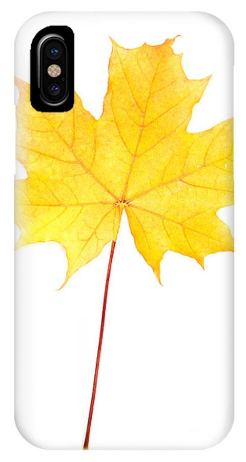 Abstract IPhone X Case featuring the photograph Autumn Yellow Maple Leaf by IB Photography