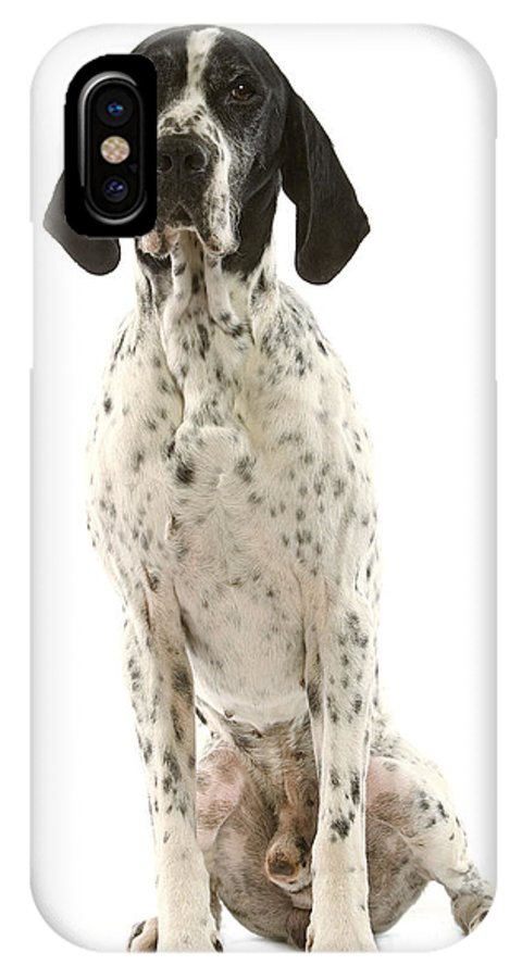 Auvergne Pointer IPhone X / XS Case featuring the photograph Auvergne Pointer by Jean-Michel Labat