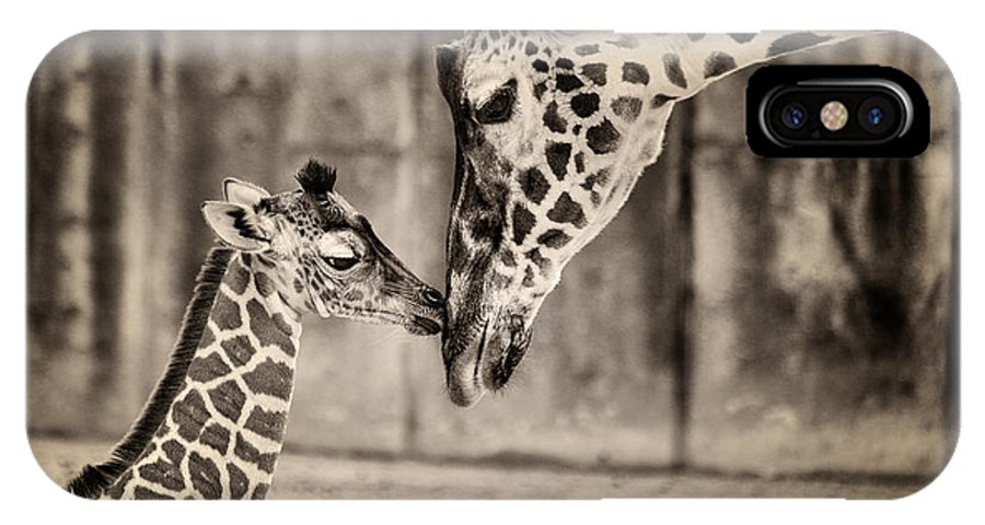 Giraffe IPhone X Case featuring the photograph Aww Mom by Michael Pachis