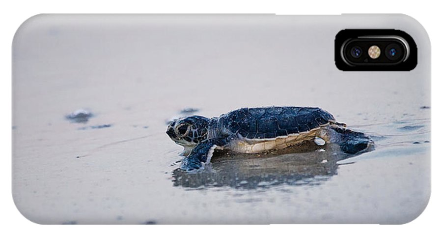 Green Sea Turtle IPhone X Case featuring the photograph Baby Green Sea Turtle Amelia Island Florida by Dawna Moore Photography