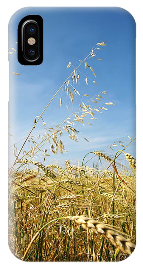 Barley IPhone X Case featuring the photograph Barley And Oat Vertical by Sylvie Bouchard
