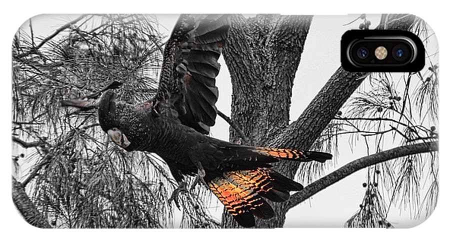 Red Tailed Black Cockatoo IPhone X Case featuring the photograph Base Jumper by Douglas Barnard