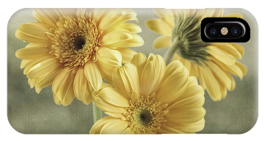 Gerbera Daisy IPhone X Case featuring the photograph Believe by Kim Hojnacki