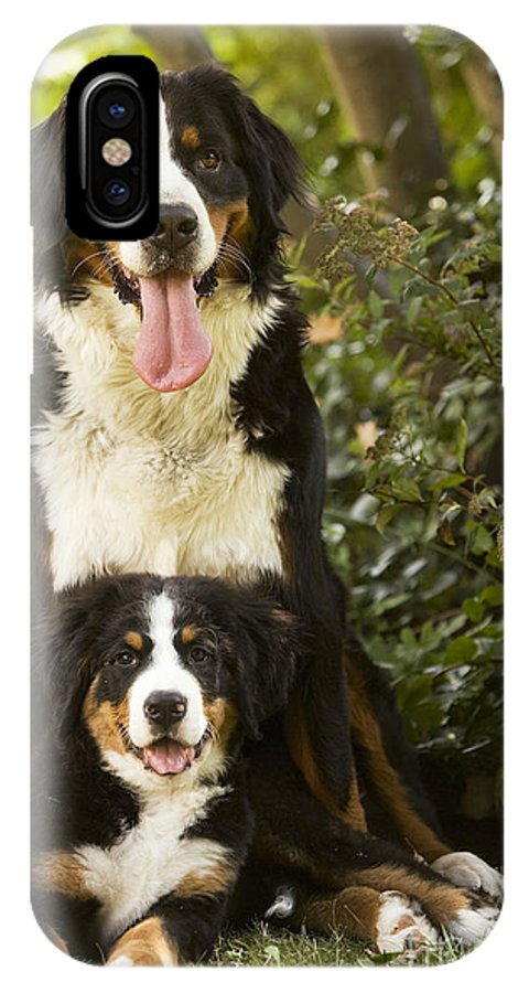 Bernese Mountain Dog IPhone X / XS Case featuring the photograph Bernese Mountain Dogs by Jean-Michel Labat