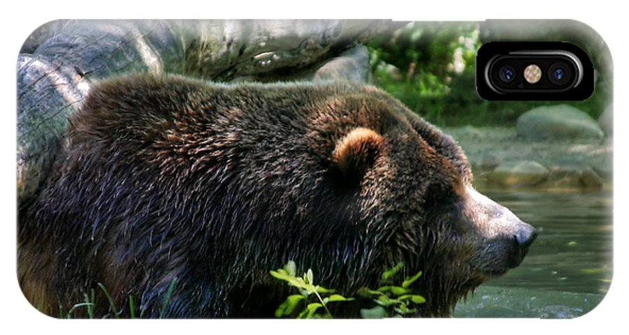 Black Bear IPhone X Case featuring the photograph Black Bear by Mary Almond