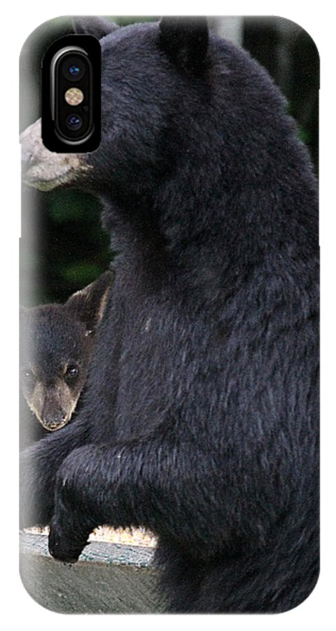 Maine Wildlife IPhone X / XS Case featuring the photograph Black Bear With Cub by Sharon Fiedler