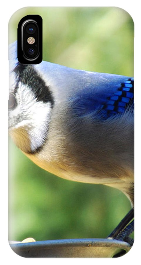 Blue Jay IPhone X Case featuring the photograph Blue Boy by Cynthia Syracuse