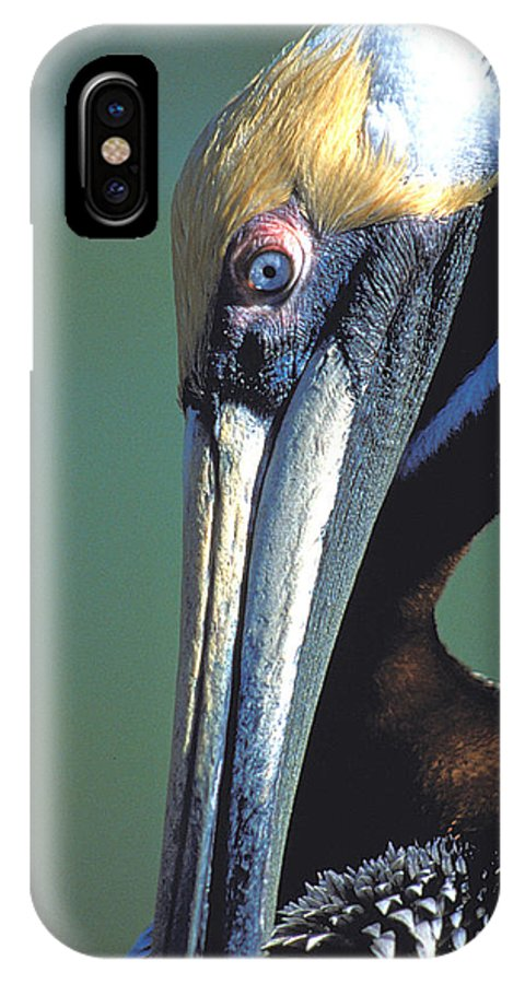 Bird IPhone X Case featuring the photograph Blue-eyed Pelican by Carl Purcell