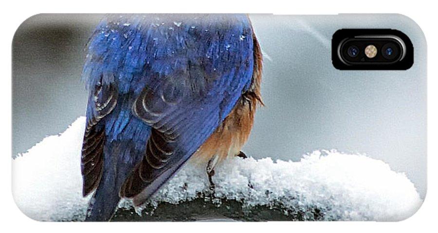 Bluebird IPhone X / XS Case featuring the photograph Bluebird In Snowstorm by Boyd E Van der Laan