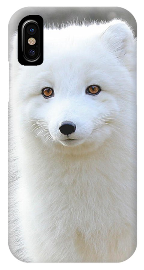 White Fox IPhone X Case featuring the photograph Bright Eyes by Athena Mckinzie
