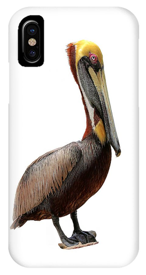 Pelican IPhone X Case featuring the photograph Brown Pelican-7 by Rudy Umans