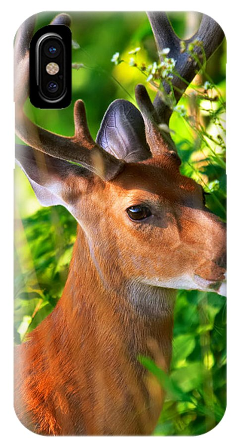 Deer IPhone X Case featuring the photograph Buck In Velvet by Mary Almond