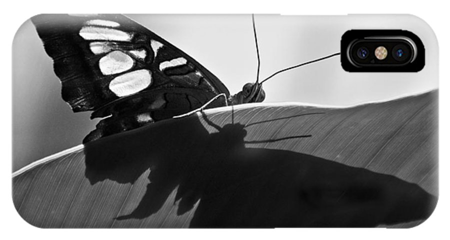 Butterfly IPhone X Case featuring the photograph Butterfly II by Ron White