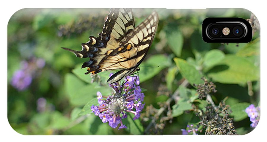 A Butterfly Spreading The Wealth. IPhone X Case featuring the photograph Butterfly by Robert Loe