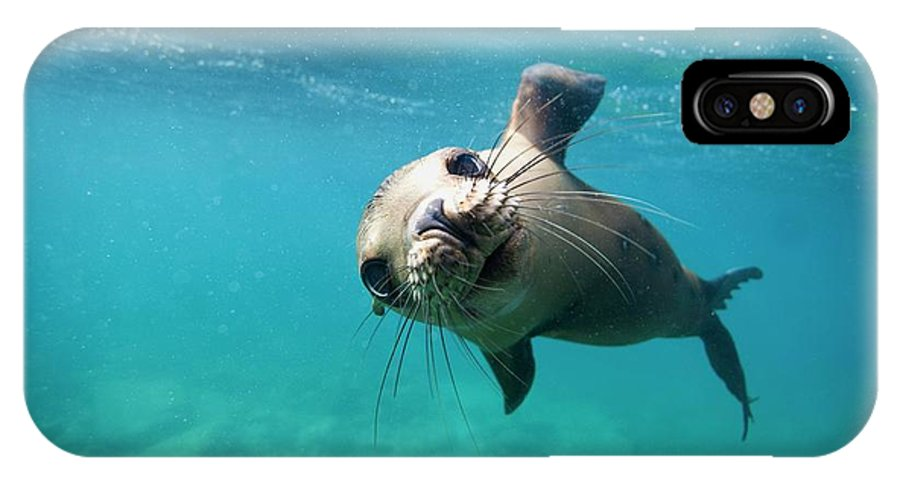 California Sea Lion IPhone X Case featuring the photograph California Sea Lion Pup by Christopher Swann