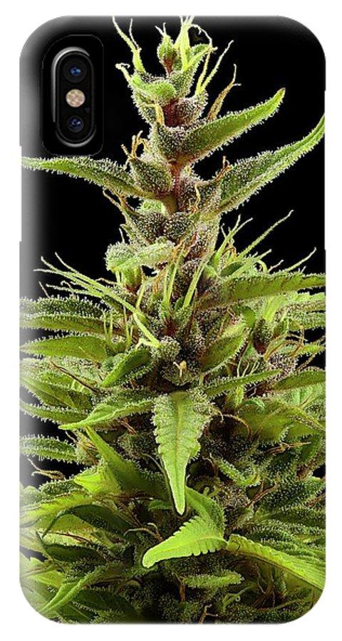 Cannabis Sativa IPhone X Case featuring the photograph Cannabis Sativa Flower 1 by Antonio Romero