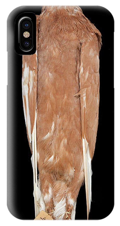 Animal IPhone X Case featuring the photograph Charles Darwin's Pigeons by Natural History Museum, London