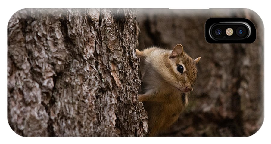 IPhone X Case featuring the photograph Cheeky Chipmunk by Cheryl Baxter