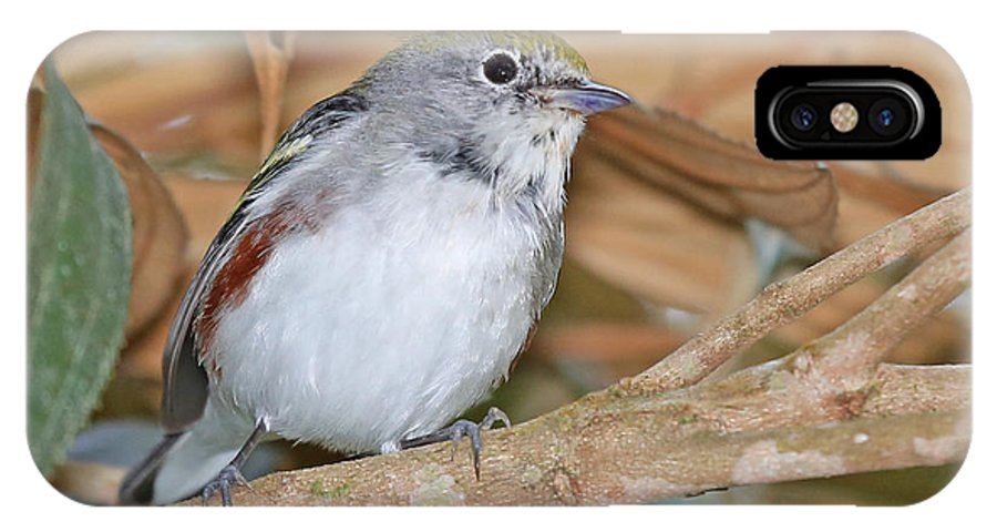 Nature IPhone X / XS Case featuring the photograph Chestnut-sided Warbler by Mike Dickie
