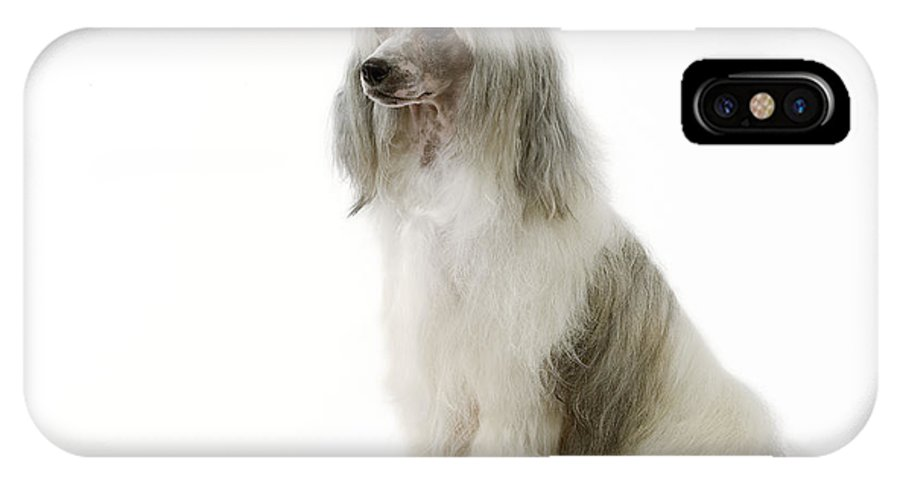 Chinese Crested IPhone X / XS Case featuring the photograph Chinese Crested Dog by Jean-Michel Labat