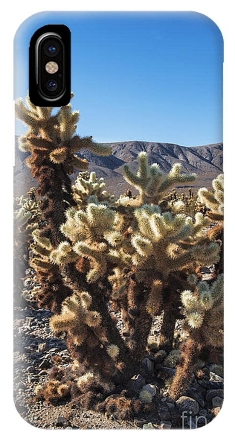 Cholla Cactus Garden IPhone X Case featuring the photograph Cholla Cactus by Yefim Bam