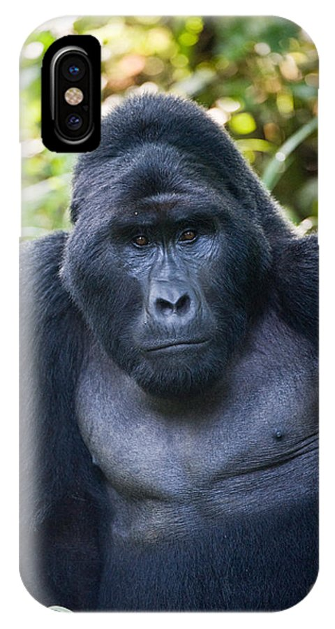Photography IPhone X Case featuring the photograph Close-up Of A Mountain Gorilla Gorilla by Panoramic Images