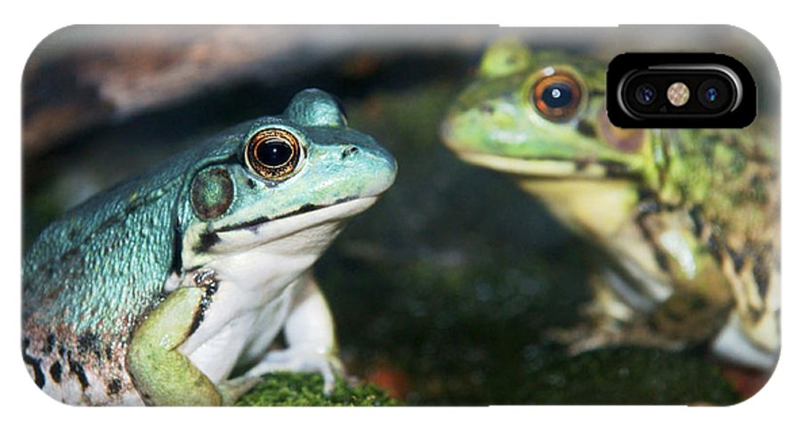 Frog IPhone X Case featuring the photograph Close-up Of Blue And Green Frogs by Sylvie Bouchard