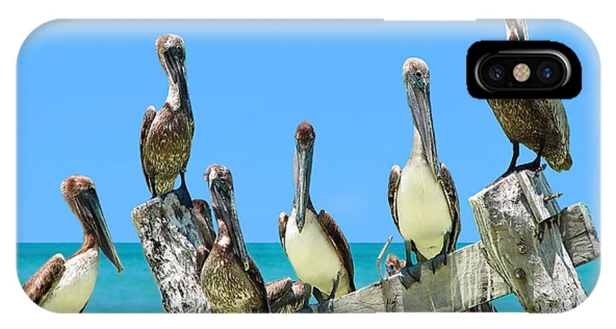 Bird IPhone X Case featuring the photograph Crowd Of Brown Pelicans Perched On An Old Peer by Sylvie Bouchard