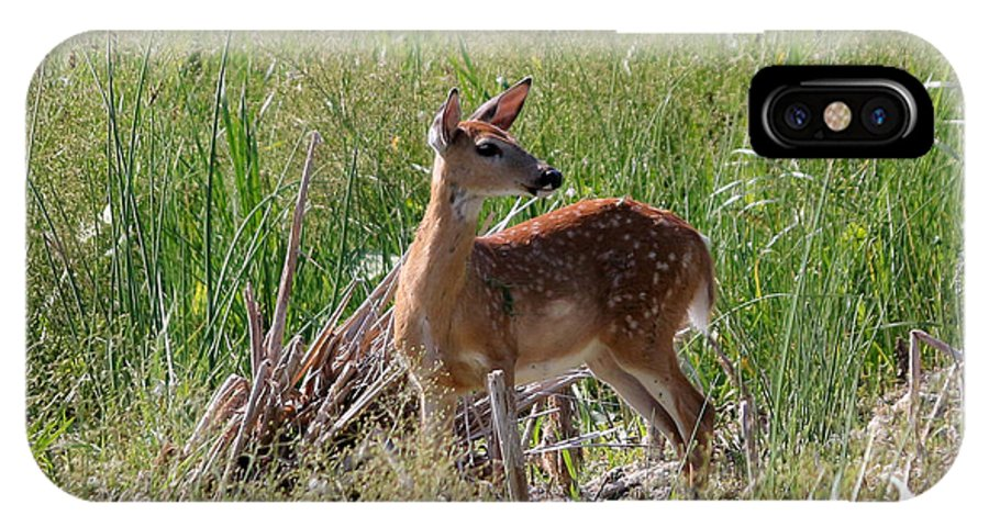 Deer IPhone X Case featuring the photograph Curious Whitetail by Lori Tordsen