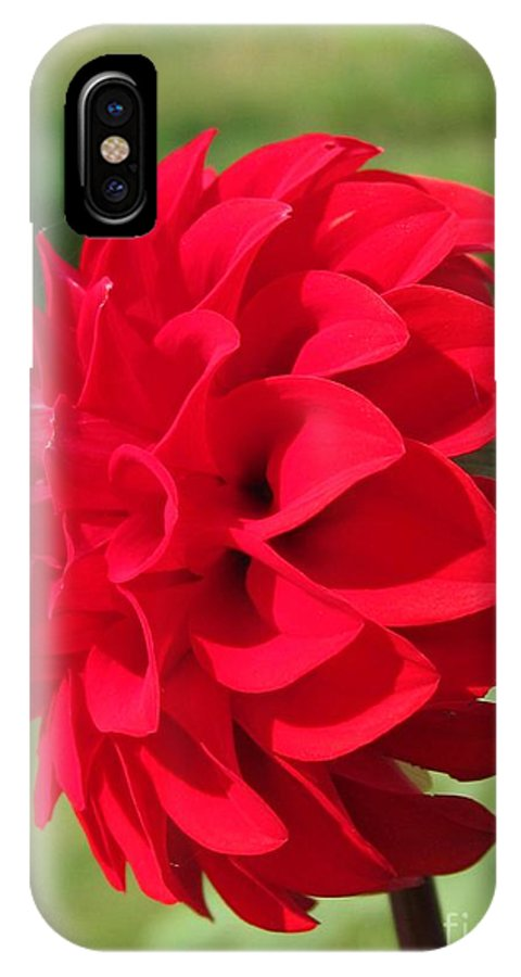 Mccombie IPhone X Case featuring the photograph Dahlia Named Ali Oop by J McCombie