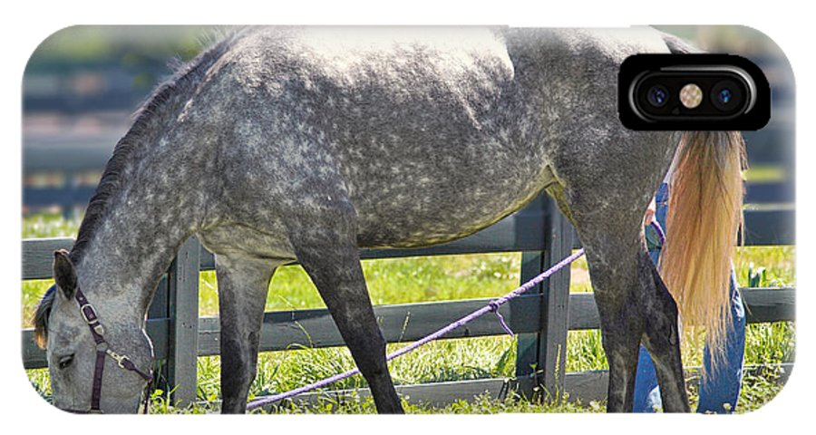 Dapple Grey IPhone X Case featuring the photograph Dapple Grey Horse by Mary Almond