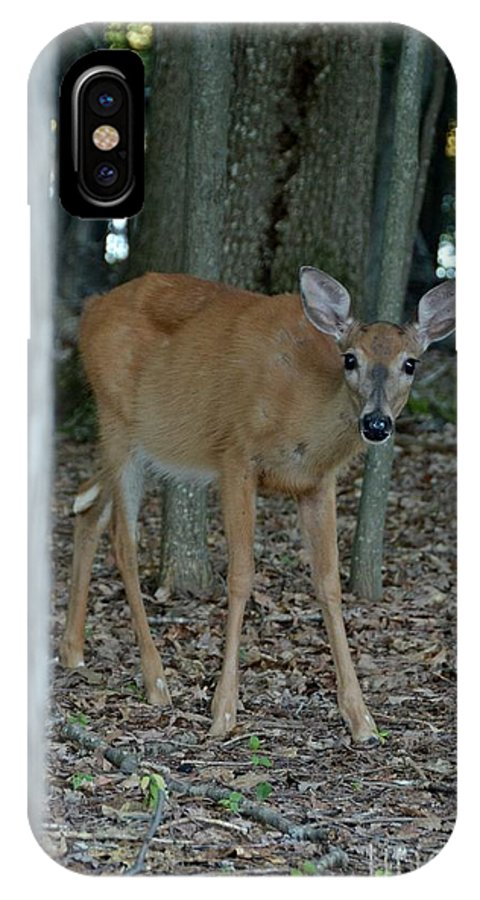 Deer IPhone X Case featuring the photograph Deer 1 by Cassie Marie Photography