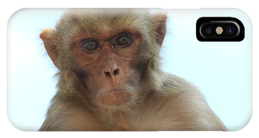 Monkeys IPhone X Case featuring the photograph Don't Teasing Me by Four Hands Art