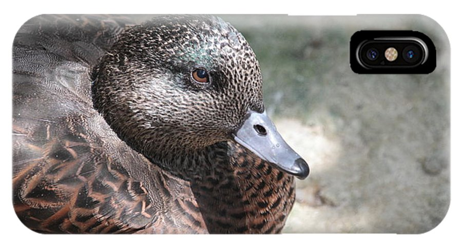 Duck IPhone X Case featuring the photograph Duck by Dwight Cook