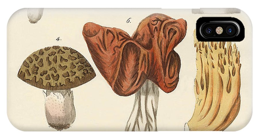 Truffle IPhone X Case featuring the drawing Eatable Mushrooms by Splendid Art Prints