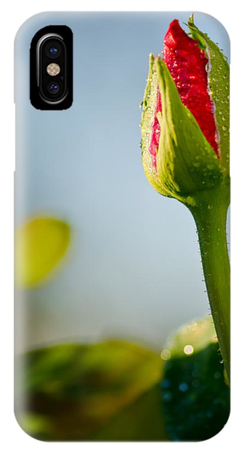 Oregon IPhone X Case featuring the photograph Emerging by Nick Boren