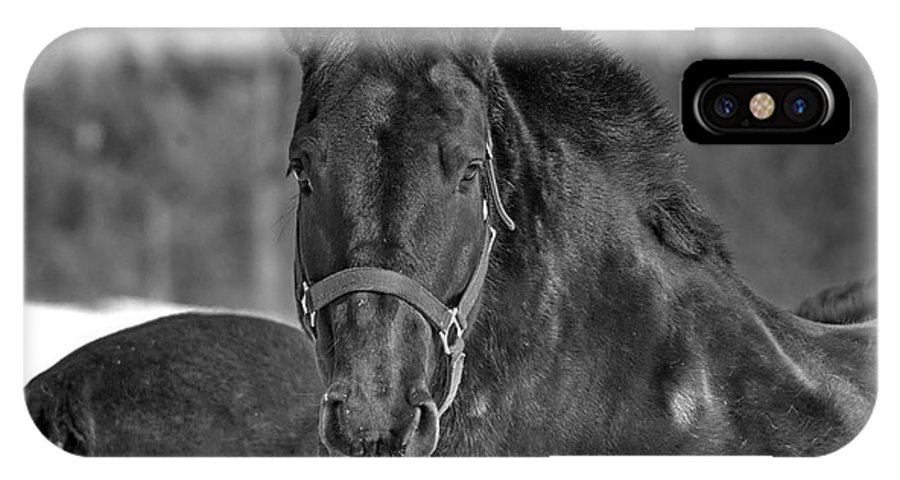Michael Cummings IPhone X / XS Case featuring the photograph Equine Majesty by Michael Cummings