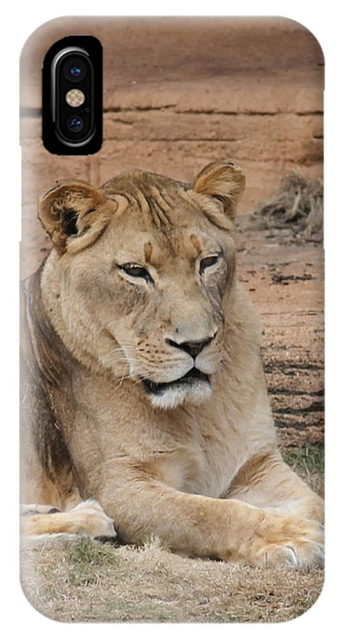 Lion IPhone X Case featuring the photograph Female African Lion by Cathy Lindsey