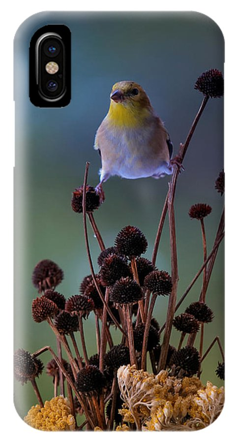 IPhone X Case featuring the photograph Finch by Bruce Brooks