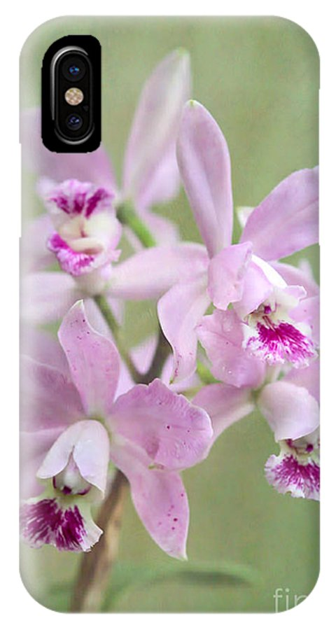 Amazing IPhone X Case featuring the photograph Five Beautiful Pink Orchids by Sabrina L Ryan